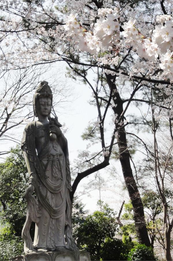 Kannon and sakura
