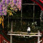 Heron and wisteria