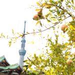 Tenjin, Skytree and pomegranate