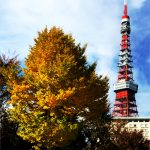 Gingko tree and the tower