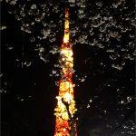 """""""yozakura"""" at the tower"""